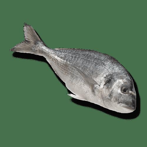 isola-fish-dorade-heel-1