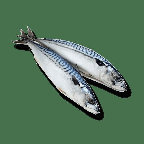 isola-fish-makreel