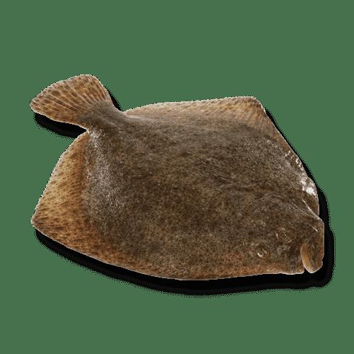 isola-fish-tarbot-heel